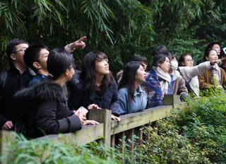 成都ジャイアントパンダ繁殖研究基地を見学する訪中団